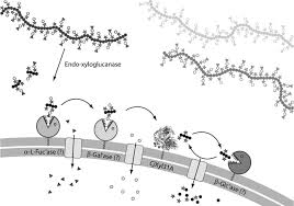 structural and enzymatic characterization of a glycoside hydrolase   figure
