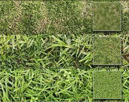 60 Best Photoshop Grass Textures Free PSD Download Free Premium
