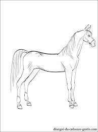 Disegni Di Cavallo Arabo Da Colorare Disegni Da Colorare Gratis