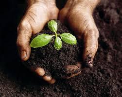 Resultado de imagem para agricultor plantando