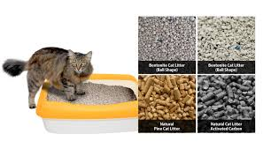 image cat litter. Brilliant Image Intended Image Cat Litter