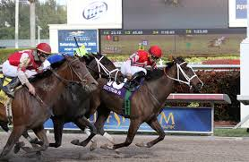 Image result for trifecta horse racing