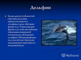 Презентация на тему Тема Приспособленности живых организмов к  3 Дельфин