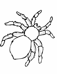 Small Picture Halloween Spider Coloring Pages Spider Coloring Pages Page