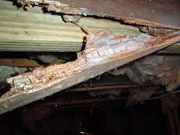 dry rot damage to crawl e wood