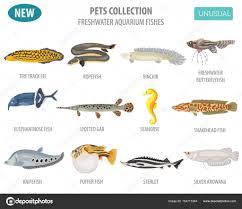 Aquarium Fish Name And Picture Unusual Freshwater Aquarium