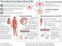 stem cell research trends in and perspectives on the evolving figure 1 stem cell types and characteristics