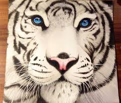 tiger face drawing pencil. Perfect Face Tiger Drawing Pictures Throughout Face Pencil A