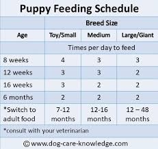Puppy Eating Chart Simple Puppy Feeding Schedule You Absolutely Need
