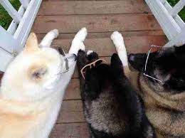 a blind dog with his two seeing dog siblings