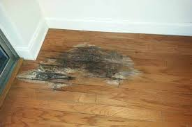 water damage to your wood floors