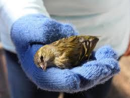 Vogel Prallt Gegen Fenster Aufkleber Bieten Wenig Schutz Wohnen