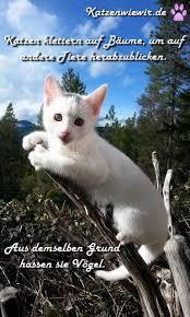 Süße Katzen Bilder 6 Katzen Wie Wir