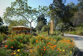 rancho santa ana botanic garden offers free admission on september 9 each year to commemorate the admission of california as the 31st state