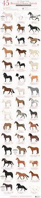 45 Beautiful Horse Breeds