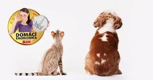 Pojistit Si Psa Kočku Nebo Fretku Víme Kolik Vás To Bude Stát