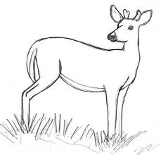 Deer Sketch Drawing At Paintingvalley Com Explore Collection Of