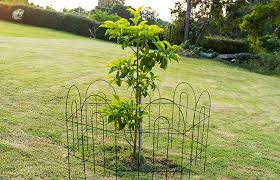 decorative wire garden fence. This Garden Fence Is Great For Flower Borders, Path Edging, Lawns Or  Creating Decorative Features Around Trees Other Focal Points. Wire Garden Fence