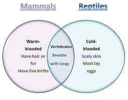Difference Between Amphibians And Reptiles Venn Diagram Learning Ideas Grades K 8 Mammals And Reptiles Venn Diagram