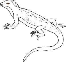 Awesome Animal Coloring Pages Childrens Best Activities Lizard2 Free