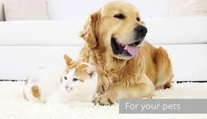 cat urine and pet urine urine stain