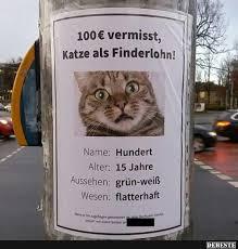 100 Euro Vermisst Katze Als Finderlohn Lustige Bilder Sprüche
