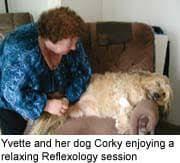 Canine Reflexology Animal Wellness Guide