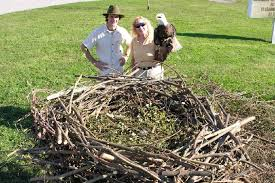 eagles nest size wauhatchie school wants to build life size eagle nest times free press