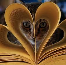 Bildresultat för cats and books