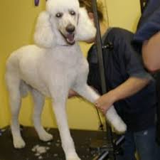 photo of a pooch parlor lancaster pa united states