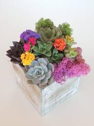 succulent-arrangement-1640