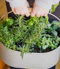 indoor herb garden ideas. We Hope You Enjoyed All These DIY Indoor Herb Garden Ideas. Looking For More? Might Want To Check Out Our Post On Teacup Gardens \u0026 Planters! Ideas
