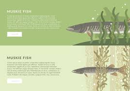 Muskie Fish Banner Template Free Vector Download Free Vector Art