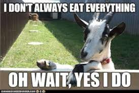 Goat Quotes Cool Community Post 48 Goat Quotes For Every Occasion Hahahahaha