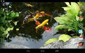 Koi Live Wallpaper Apk posted by ...