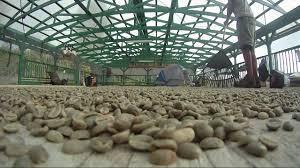 a typical kona coffee farm work week