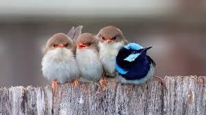birds wallpaper. Delighful Birds Cute Birds Wallpaper To Wallpaper