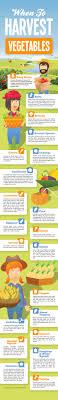 Kitchen Garden Produce Handy Infographic For Gardeners When To Harvest Vegetables