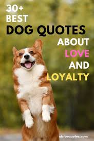 30 Funny And Inspirational Dog Quotes About Love And Loyalty Images