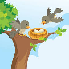 Image result for birds in a nest