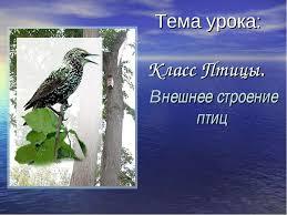 Презентация Класс птицы класс скачать бесплатно Класс Птицы Внешнее строение птиц