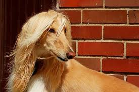 5 Healthy <b>Oils</b> to Give Your <b>Dog's</b> Coat (and Brain) a Boost | The ...