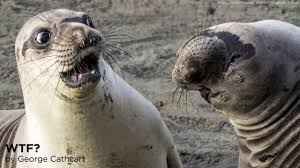 Image result for hilarious wildlife shots