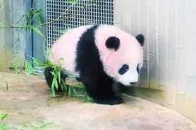 上野 動物園 パンダ