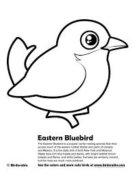 Eastern Bluebird Coloring Page My Localdea