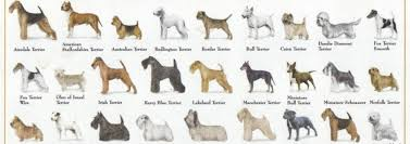 Do We Need A National Purebred Dog Day Lets Talk Dogs