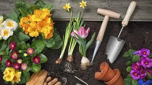 5 gardening jobs for winter