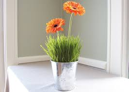 Floral Verde LLC-Wheatgrass Centerpieces - Casual, Fun, and Easy .