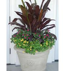 210 Best Container Gardening Images On Pinterest  Flowers Container Garden Shade Plants