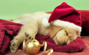 christmas puppies wallpaper. Wonderful Puppies Throughout Christmas Puppies Wallpaper I